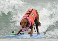 Be Who You Are, From Service Dog to Surfice Dog