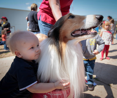 """As Save the Children's new ambassador for its """"Get Ready Get Safe"""" initiative, Lassie visited Moore, Okla., to help show children preparedness c..."""