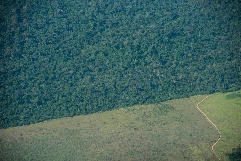 Amazon deforestation leaps 16 percent in 2015