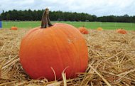 Why not take kids apple or pumpkin picking this fall?