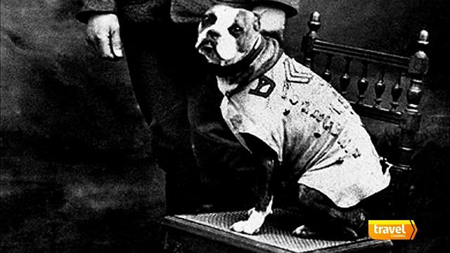 Most Decorated Animal of World War I