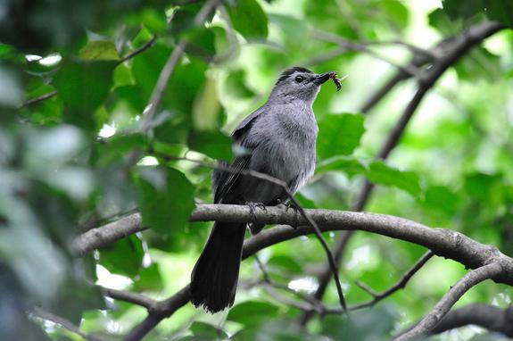 Songbirds Emerge for Spring, But Is the Timing Off? (Essay)