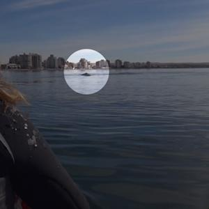 Kayakers in Argentina filmed breathtaking encounter with whale