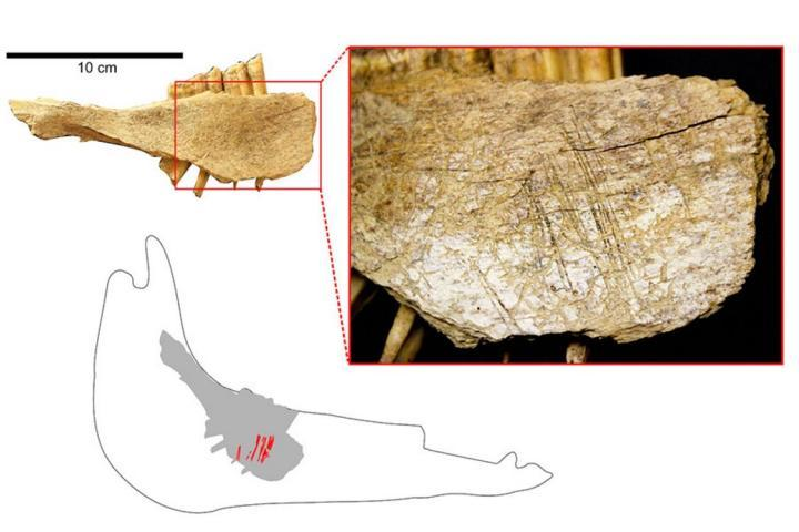 Human Arrival In North America Set At 24,000 Years Ago