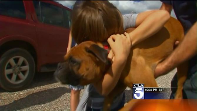 Animal Shelters See Significant Increase in Runaway Pets Over Fourth of July