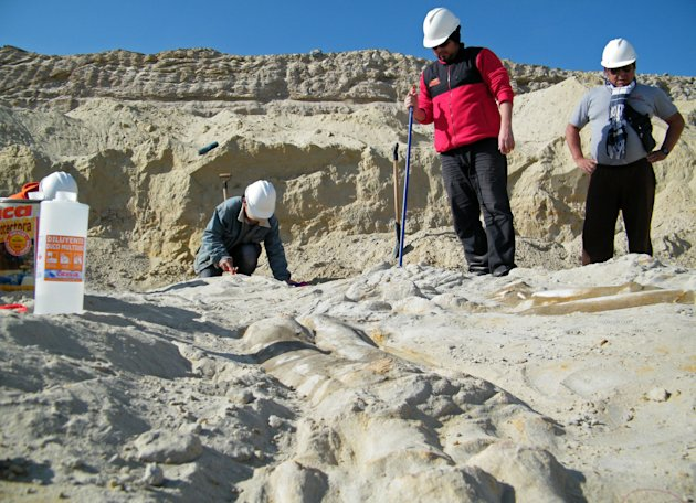 In this July 8, 2010 photo released by Chile's Paleontological Museum of Caldera, researchers from the museum work at the site where prehistoric whale fossils were discovered in the Atacama desert