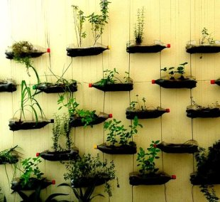 Reused Soda Bottle Wall Garden