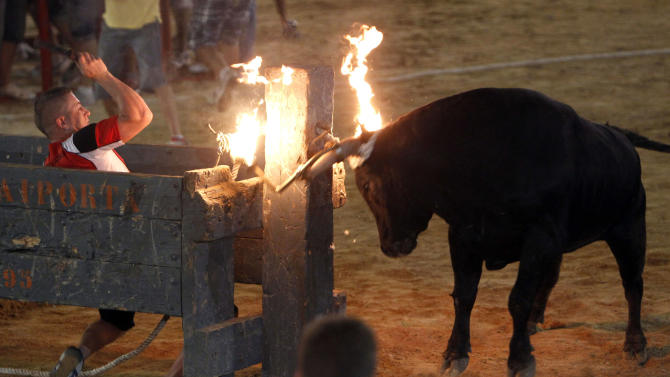 In this Sept. 9, 2011 photo, a reveler runs away from a bull with flaming horns during a festivity in Sueca,near Valencia, Spain. The fiesta is a prelude to en event featuring a hulking black and white bull whose name is 'Raton' (Mouse), a  1,100-pound (500-kilogram) beast, who has killed two people in the arena and injured five others over the years at pueblo (village) parties. Mouse is released in a ring and amateur daredevils provoke him so he'll chase them around to the cheers of thousands. (AP Photo/Alberto Saiz)