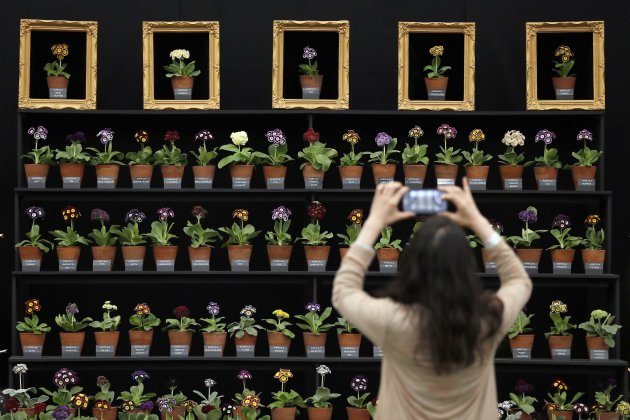 A visitor photographs a floral display at the Chelsea Flower Show in London