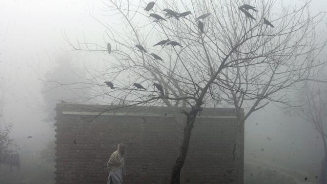 A man walks past birds perched in a tree on a foggy morning in Lahore, Pakistan, Tuesday, Feb. 9, 2016. (AP Photo/K.M. Chaudary)