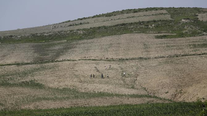 In this June 24, 2015, photo, farmers are dwarfed against a hill as they work in a corn field in South Hwanghae, North Korea. There has been almost no rain in this part of the country, according to farmers and local officials interviewed by The Associated Press. While the situation in the area that the AP visited looks grim, it is unclear how severe the drought is in the rest of the country. (AP Photo/Wong Maye-E)