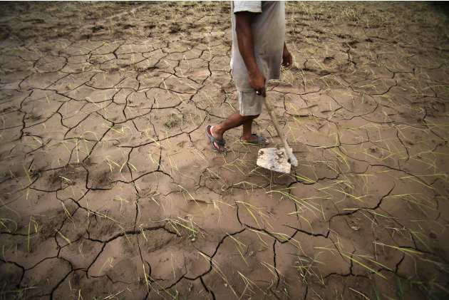 An Indian farmer walks through a dry, cracked paddy field in Ranbir Singh Pura 34 kilometers (21 miles) from Jammu, India, Friday, Aug. 3, 2012. India's Meteorological Department says it expects the c