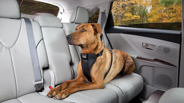 N.J. May Become First State to Require Seat Belts for Pets (ABC News)