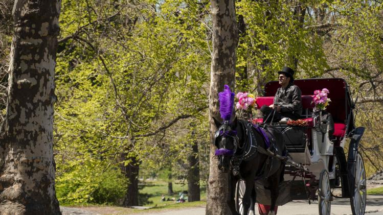 A horse pulls a carriage through Central Park in New York