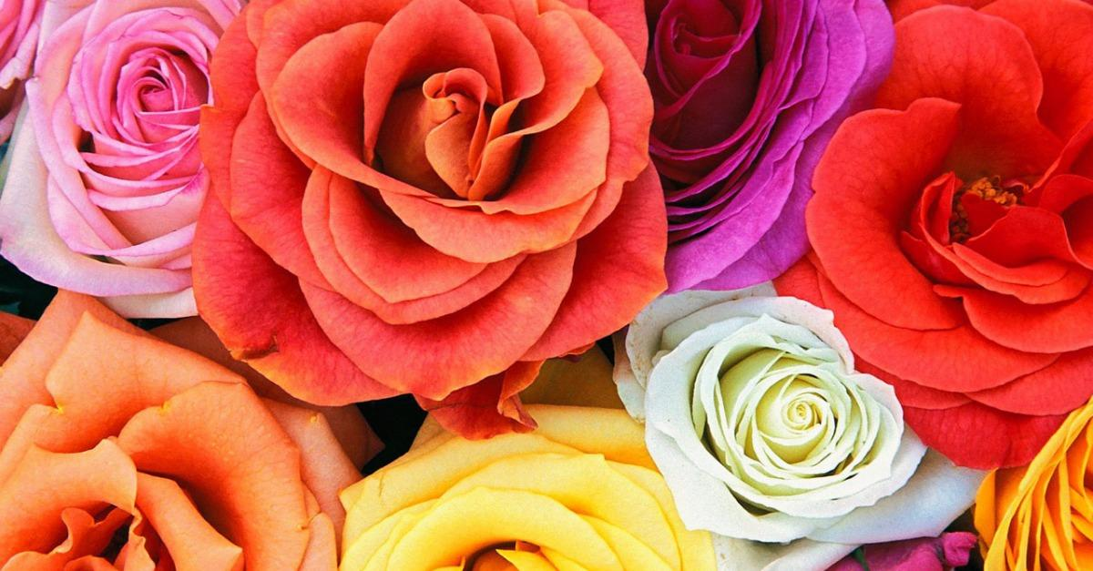 Best Deals on Flowers - Yahoo Trending Search