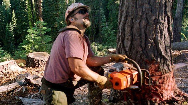 Could new EPA regulations topple the timber industry?