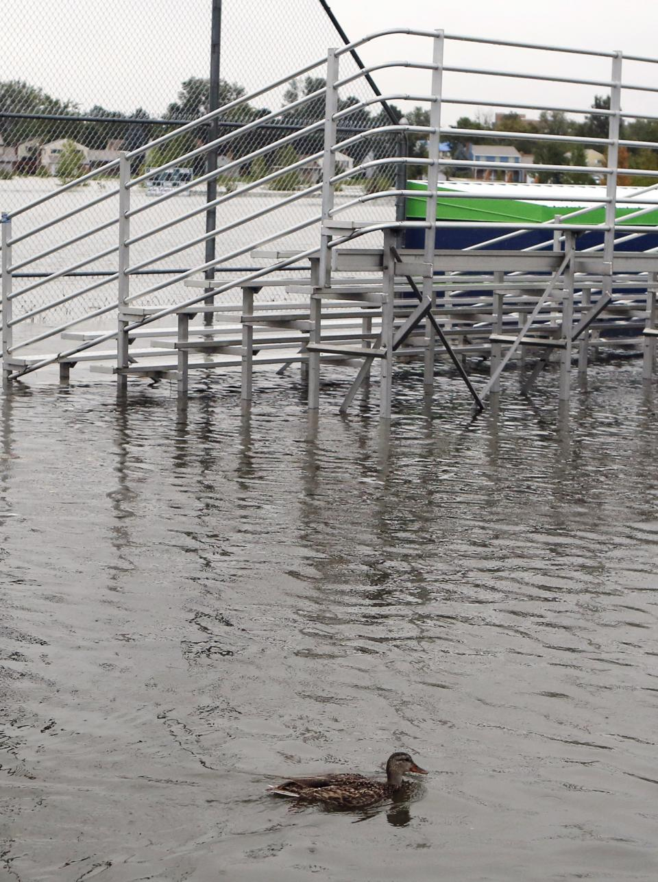 A duck swims near bleachers at Utah Park on Thursday, Sept. 12, 2013, in Aurora, Colo. The park was under water Thursday due to flooding. Flash flooding in Colorado has cut off access to towns, closed the University of Colorado in Boulder and left at least three people dead.(AP Photo/Ed Andrieski)