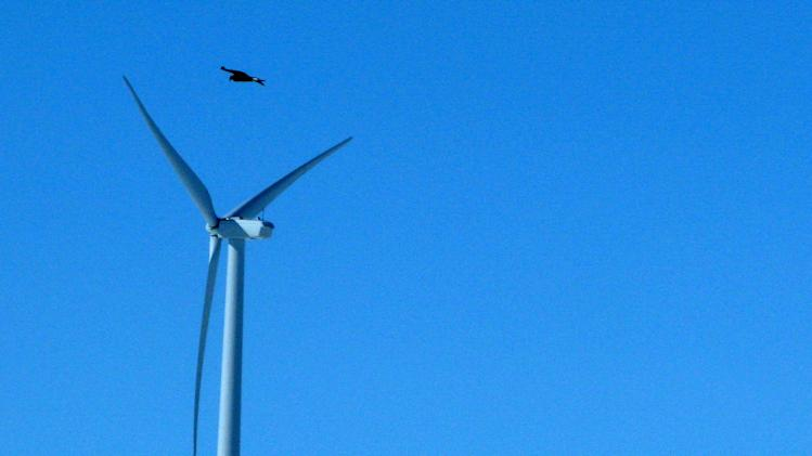 FILE - In this April 18, 2013, file photo, a golden eagle is seen flying over a wind turbine on Duke energy's top of the world wind farm in Converse County Wyo. For the first time, the Obama administration is taking action against wind farms for killing eagles. In a settlement announced Friday, Nov. 22, Duke Energy will pay $1 million for killing 14 golden eagles over the past three years at two Wyoming wind farms. The company says it pleaded guilty to misdemeanor charges under the Migratory Bird Treaty Act. (AP Photo/Dina Cappiello, File)