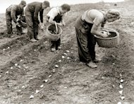 Planting potatoes on St. Patrick's Day – a deeply-rooted Irish tradition