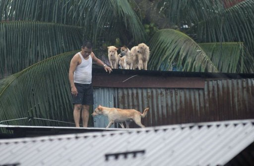 A resident gathers his pet dogs on the roof of his flooded house in suburban Manila