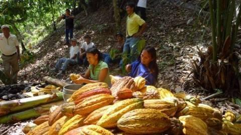 Hershey Helps Remote Peruvian Village Rebuild Through Cocoa Farming
