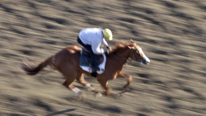 A horse runs on the track for a morning workout at Belmont Park, Wednesday, June 5, 2013 in Elmont, N.Y. The Belmont Stakes horse race is Saturday. (AP Photo/Mark Lennihan)