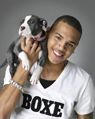 chris brown and pit bull puppy