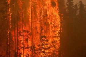 Trees are consumed by flames as an out of control wildfire burns near Willow, Alaska