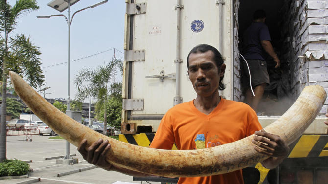 """In this photo taken on April 1, 2011, a Thai worker carries seized elephant tusks smuggled into Thailand from Kenya before a press conference at the customs headquarters in Bangkok, Thailand. How to slow the slaughter and curb the trade in """"blood ivory"""" will be among the most critical issues up for debate at the 177-nation Convention on International Trade in Endangered Species, or CITES, that gets under way Sunday, March 3, 2013 in Bangkok. (AP Photo/Sakchai Lalit)"""