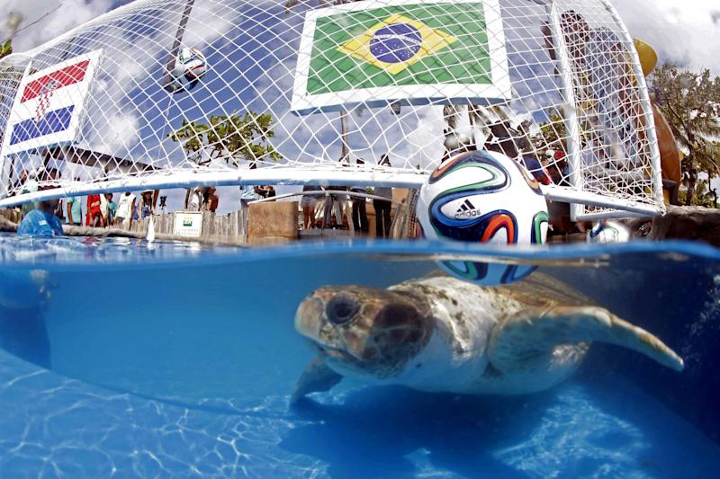 Brazil's animal oracle predicts home win