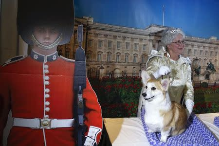 "A Pembroke Welsh Corgis breed stands at a ""Queen Elizabeth"" themed demonstration booth during a press conference for the upcoming 139th Annual Westminster Kennel Club Dog Show in New York January 21, 2015. REUTERS/Shannon Stapleton"