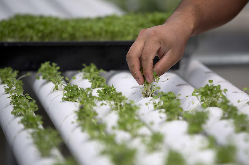 Dry Nevada seeing green in indoor farming