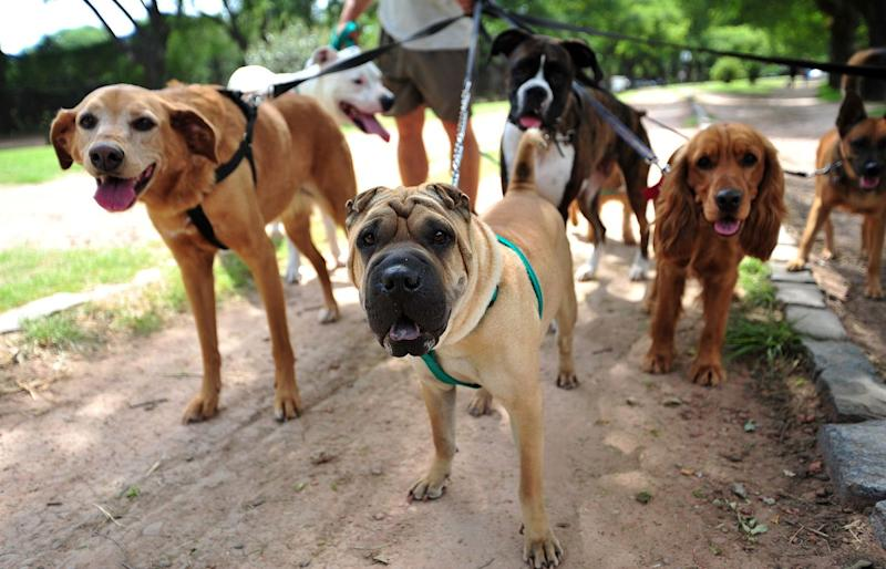 Dog Walkers to Be More in Demand Than Teachers in Next Decade