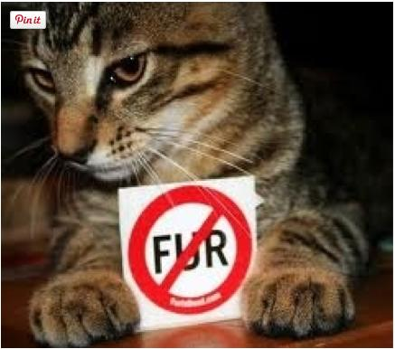 """<div class=""""caption-credit""""> Photo by: iStock</div><div class=""""caption-title"""">Stop Wearing Fur and Leather</div>Think about it. Is it really necessary for animals to die so a person can have a fancy bag or pair of shoes? If we didn't keep reinforcing these inhumane practices by keeping suppliers in the green, there would be no supply and demand. <br> <b>MORE ON BABBLE</b> <br> <a rel=""""nofollow"""" target="""""""" href=""""http://www.babble.com/pets/16-reasons-why-cats-are-better-than-people/?cmp=ELP%7Cbbl%7Clp%7CYahooShine%7CMain%7C%7C050613%7C%7CBeKindToAnimalsWeek10ThingsYouCanDoRightNow%7CfamE%7C%7C%7C"""">16 reasons why cats are better than people</a> <br> <a rel=""""nofollow"""" target="""""""" href=""""http://www.babble.com/pets/12-surprising-pets/?cmp=ELP%7Cbbl%7Clp%7CYahooShine%7CMain%7C%7C050613%7C%7CBeKindToAnimalsWeek10ThingsYouCanDoRightNow%7CfamE%7C%7C%7C"""">The 12 strangest family pets from around the world</a> <br>"""