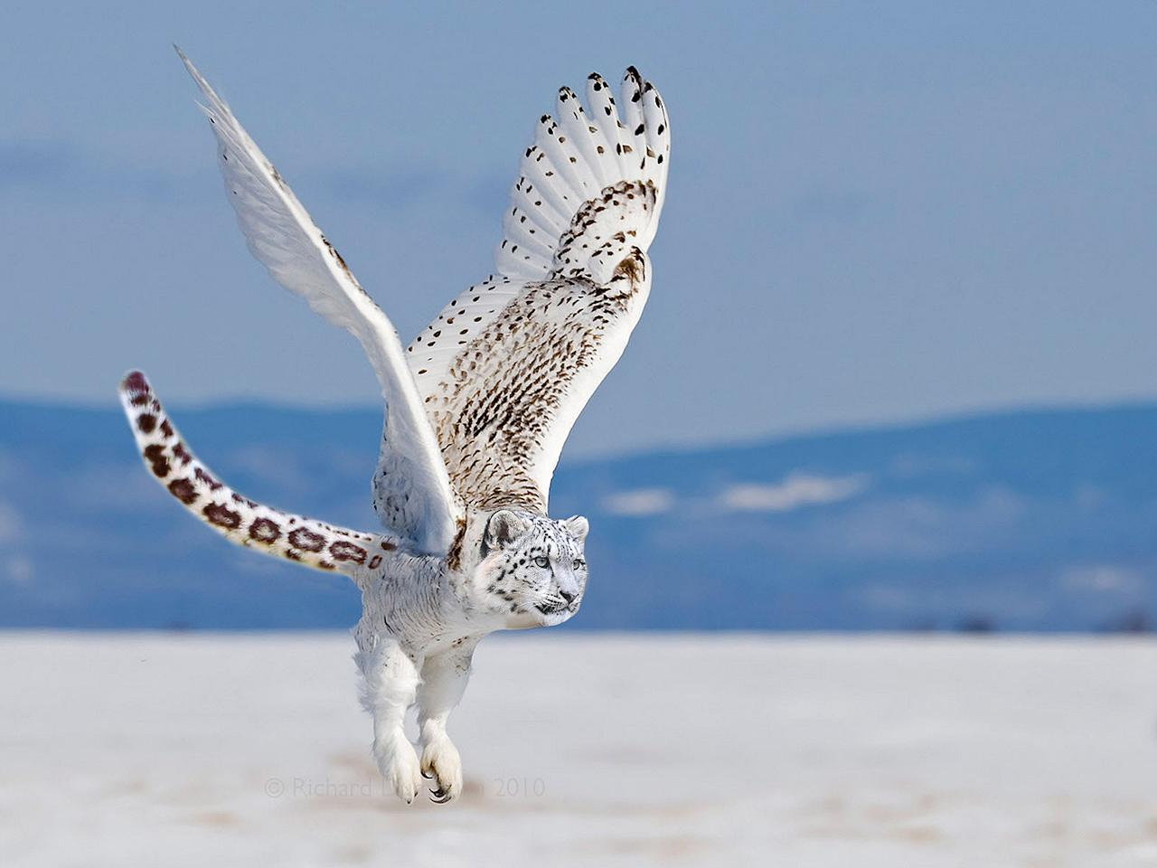 "The Snowy Owlpard. <a target=""_blank"" href=""http://i.imgur.com/VI9Jhll.jpg"">Photo</a> created by <a href=""http://www.reddit.com/user/mobuco"">mobuco</a>."