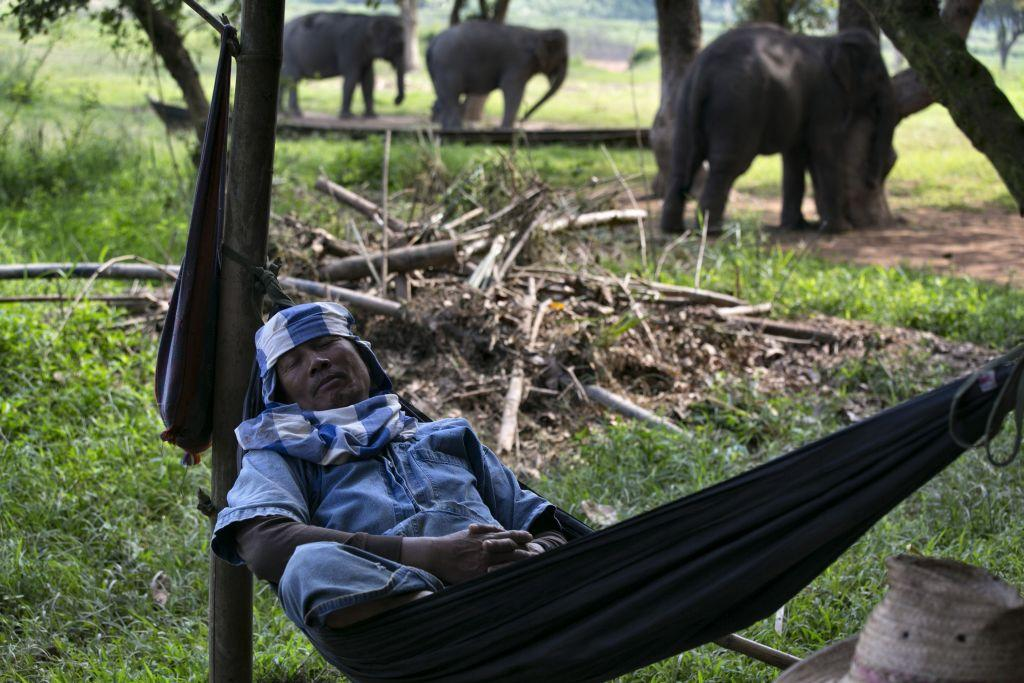 Lun, a mahout, rests in a hammock near his elephants at an elephant camp at the Anantara Golden Triangle resort in Golden Triangle, northern Thailand.