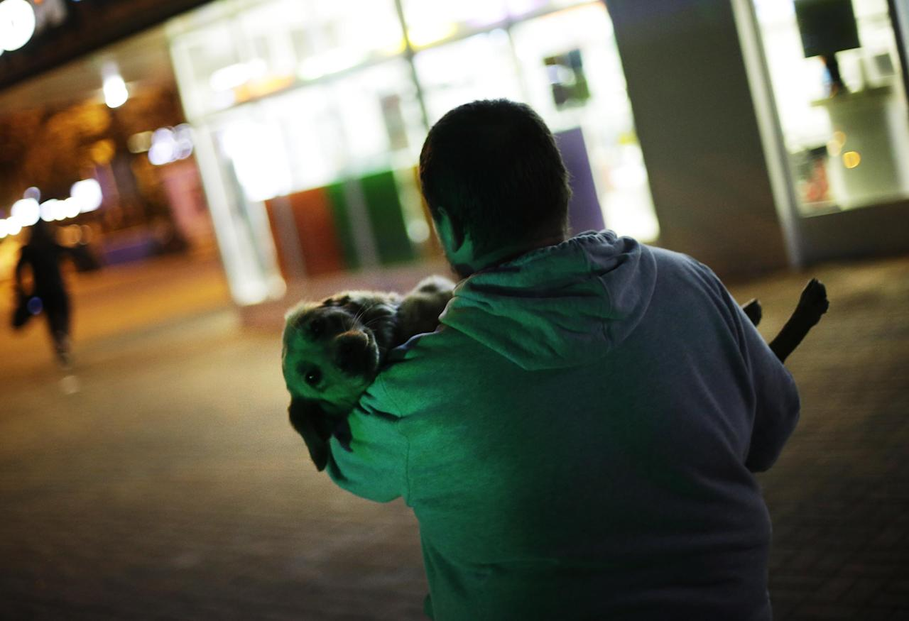 Alexei, an animal activist who would only give his first name, carries a stray half-breed Labrador to his car after finding it at a cafe's back door, Monday, Feb. 10, 2014, in central Sochi, Russia, home of the 2014 Winter Olympics. Alexei is one of a dozen people in the emerging movement of animal activists in Sochi alarmed by reports that the city has contracted the killing of thousands of stray dogs before and during the Olympic Games. Stray dogs are a common sight on the streets of Russian cities, but with massive construction in the area the street dog population in Sochi and the Olympic park has soared. Useful as noisy, guard dogs, workers feed them to keep them nearby and protect buildings. They soon lose their value and become strays. Tonight, a few dogs will be taken on their way to a new life in Moscow. (AP Photo/David Goldman)