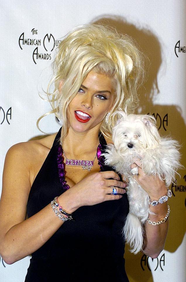 "Anna Nicole Smith introduces her dog to the media in the press room at the 32nd Annual American Music Awards. Steve Granitz/<a href=""http://www.wireimage.com"" target=""new"">WireImage.com</a> - November 14, 2004"