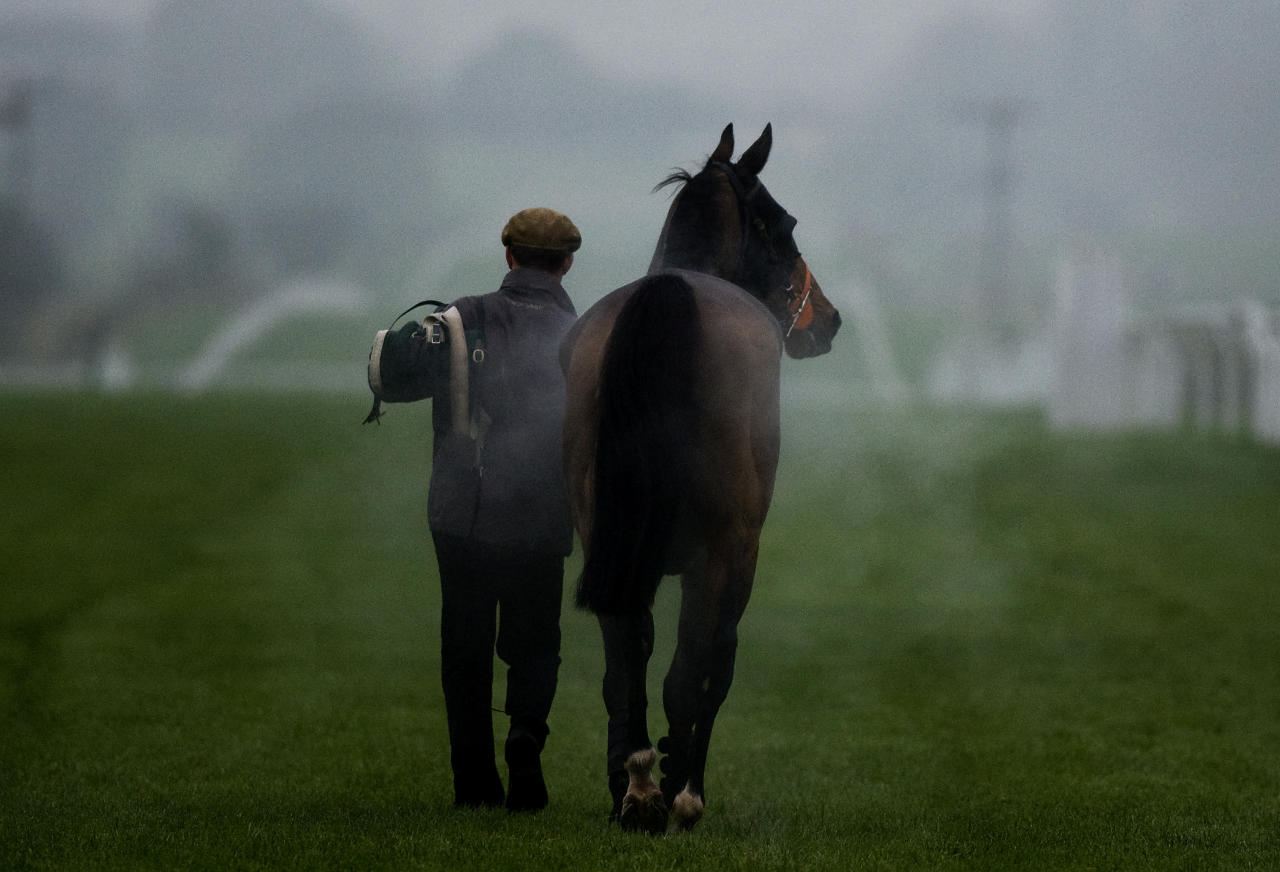 FOLKESTONE, ENGLAND - NOVEMBER 15: A runner is led back to the stables at Folkestone racecourse on November 15, 2011 in Folkestone, England.  (Photo by Alan Crowhurst/Getty Images)