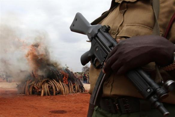 A warden stands guard as an illegal consignment of five tons of Ivory confiscated from smugglers is destroyed during the African Elephant Law Enforcement Day in Tsavo West National Park, 380 km (236 miles) east of the Kenyan capital of Nairobi July 20, 2011. The confiscated consignment, recovered from smugglers in Singapore in 2002, originated from poaching activities in both Zambia and Malawi, government officials said.