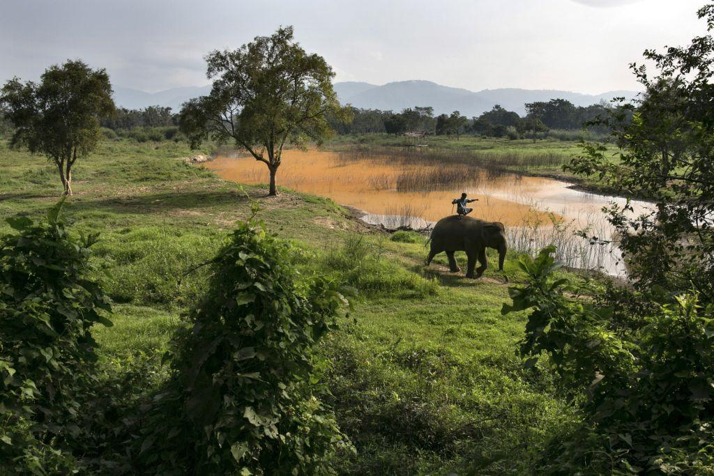A Thai elephant and a mahout ride along the field at an elephant camp at the Anantara Golden Triangle resort in northern Thailand.