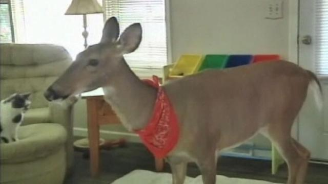 Family Fights to Keep Pet Deer