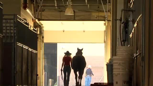 Horses saved from wildfire