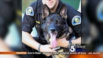 Anaheim Police Dog Retires After Recovering From Gunshot Wound