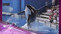 Entertainment News Pop: 'Blackfish' Doc Looks at SeaWorld's Captive Whales
