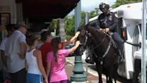 Police horse becomes Little Havana sensation