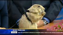 Zoo Day: Prairie dog