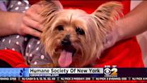 Furry Friend Finder: Harry And Mindy