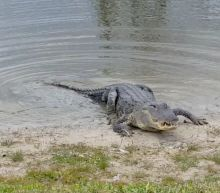 'An alligator ate my golf ball' is an excuse that's only valid in Florida