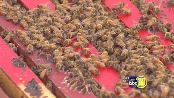 Bee deaths threaten valley crops